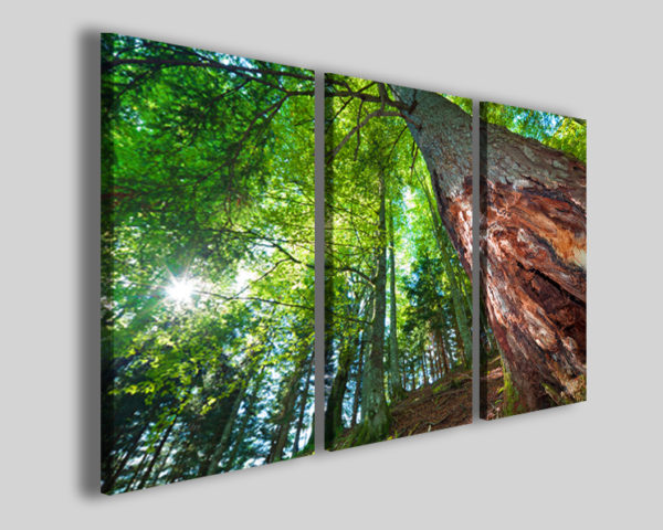 Quadri moderni Prospective tree stampe natura