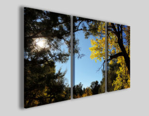 Quadri moderni Rays stampe alberi natura
