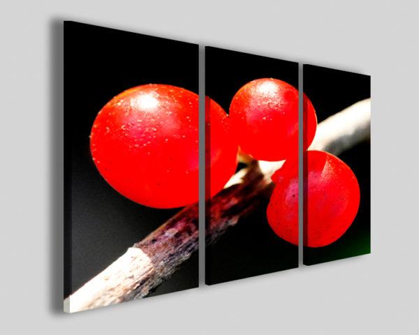 Quadro frutti colorati Real bake food e bar stampa canvas
