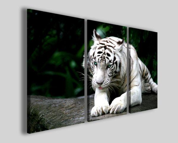 Quadri animali Tiger stampa tigre del bengala